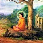 Xử sự của Đức Phật khi biết tin cả dòng họ bị giết hại?