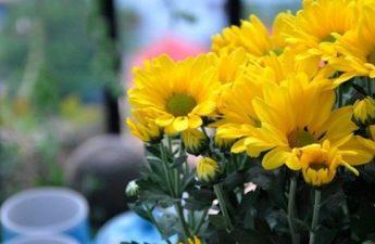 Bí ẩn tâm linh thể hiện trên lọ hoa dâng cúng Phật
