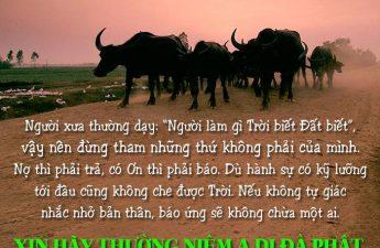 Hồn Trâu Đòi Mạng, Nhờ Phật Pháp Hóa Giải Khiến Bầy Trâu Niệm Phật Cầu Vãng Sanh Tây Phương