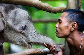 Con người và loài vật cùng mang cái thân máu thịt